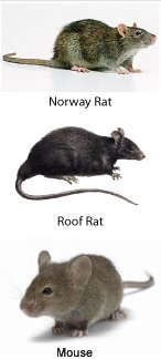 Rodents_1.jpg