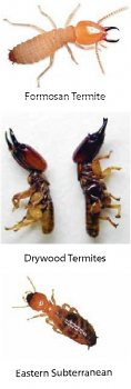 Different types of termites found during termite control in Sarasota, FL